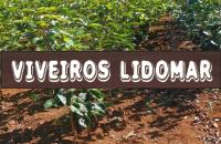 VIVEIROS LIDOMAR